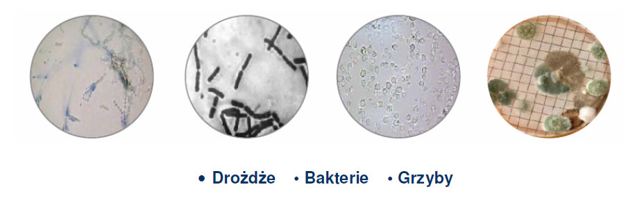 Ad Moto - Bakterie w paliwie